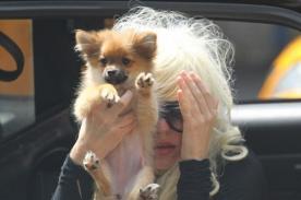 Amanda Bynes usó a su perrito para ocultarse de las cámaras