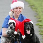 Felices Fiestas: Perros se unieron luego de que uno le salvara la vida al otro hace un año
