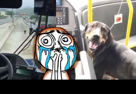 La rápida acción de un chófer para salvar a un perrito que asombra a muchos