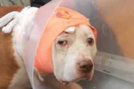 Perro recibe un balazo en la cabeza tras salvar a su dueño de un robo