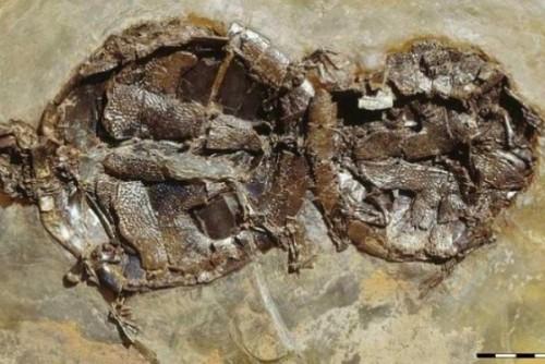 Foto: Relación sexual dura 47 millones de años