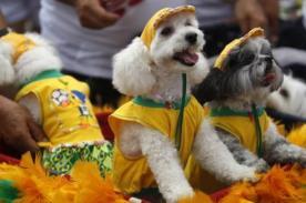 Brasil: Mascotas se disfrazan para el Carnaval - Fotos