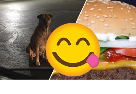 Finge ser un perro callejero para que McDonald's lo alimente