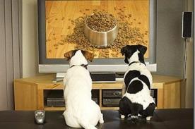 Crean un canal de televisión dirigido para perros