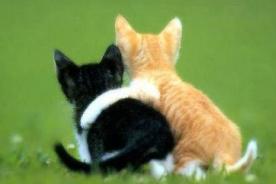 Insólito: Mujer echa a su gato a la calle por 'gay'