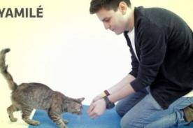 [Viral] Parodia: También los gatos reaccionan ante la magia - VIDEO
