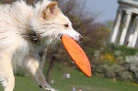 España: Contratan a perro para ser detective