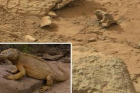 NASA: Curiosity capta  imagen de una 'iguana' en Marte - VIDEO
