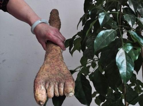 Verdura con forma de pie asombra en China