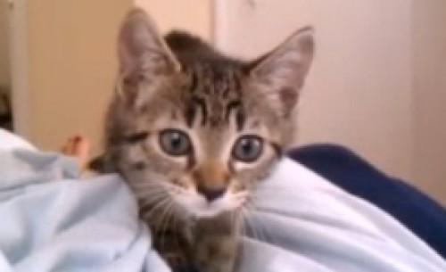 Video: Gatito se choca con lente de cámara por curioso
