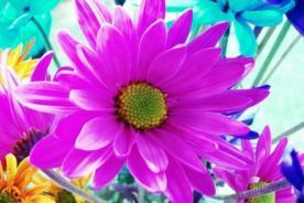 Primavera: Frases cortas y originales para inspirarte