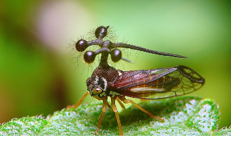 Sentirás escalofríos con estos 5 insectos que no sabías que existían