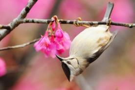 Bellas imágenes sobre la primavera
