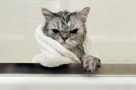 Instagram: Divertidas imágenes de gatos bañándose - Fotos