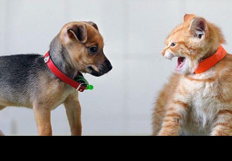 Las personas que tienen gatos son más inteligentes ¡y si tienes perros esto no te va gustar!