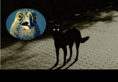 Perro muere y días después graban en video a su fantasma
