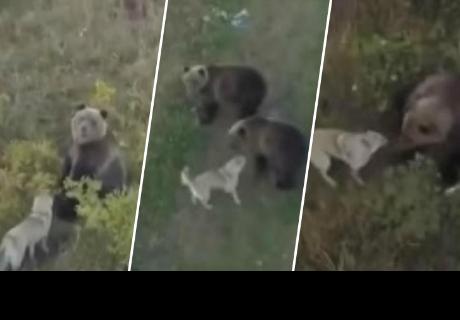 Perrito que juega con una familia de osos ha dejado impactado a más de uno en la red