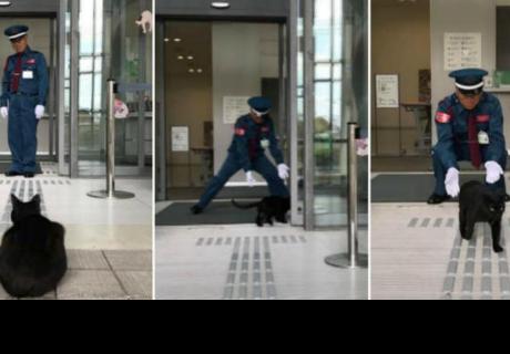 Gatos hacen lo posible para ingresar a museo y se roban las carcajadas de los cibernautas