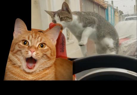 Joven intenta asustar a un gato pero el destino le devuelve la jugada