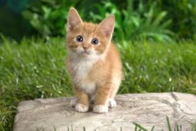 Día Internacional del Gato: Los engreídos de la casa están de fiesta