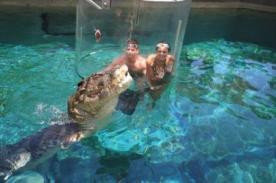 Nadar con cocodrilos: La exitosa atracción turística de Australia - VIDEO