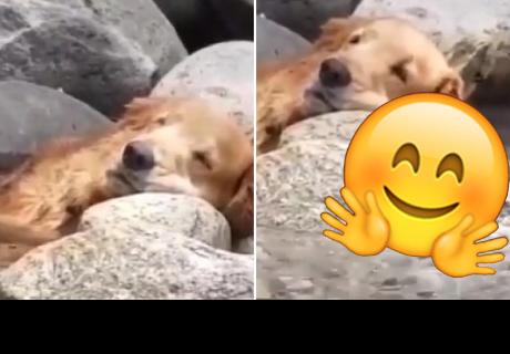Perrito se duerme en medio de un riachuelo y llena de ternura a cibernautas