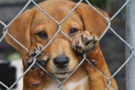 Congresista Carlos Bruce presenta nueva ley contra el maltrato animal