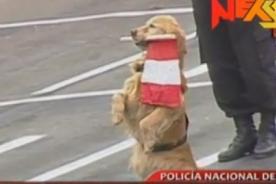 Parada Militar 2013: Canes policiales sorprenden con sus habilidades