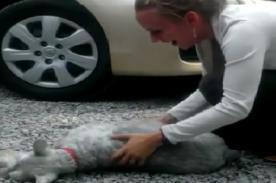 Perro se desmaya al reencontrarse con su dueña luego de 2 años [VIDEO]