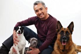 César Millán en Perú: Mascotas serán escogidas para show en Lima