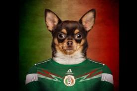 Perros usan camisetas de su selección para Mundial Brasil 2014 - Fotos