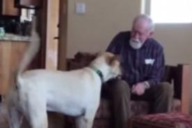 Conmovedor: Padre con Alzheimer vuelve a hablar al ver a su perro - VIDEO