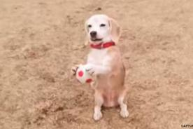 Viral: Mira el tierno perrito beagle que aprendió a ser arquero - VIDEO