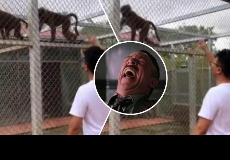 Joven hace bailar a mono con su rap y sorprende a más de uno en la red