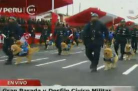 Parada militar 2013: Unidad Canina cautiva en el desfile - video