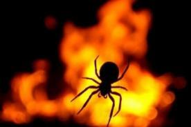 Insólito: Hombre quema su casa al intentar matar una araña