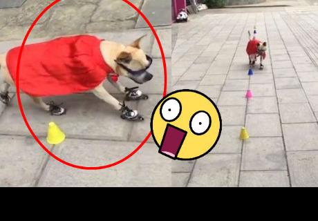 Perrito se vuelve viral por su habilidad con los patines