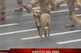 Parada Militar 2012: Perro en el desfile y desató algarabía - Video