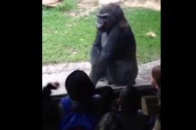 Video: Gorila se venga de molestosos niños