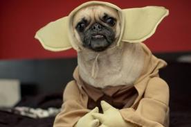 Ideas de cómo podrías vestir a tu mascota por Halloween - FOTOS