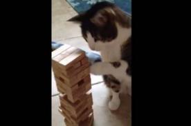 Viral: Gato que juega Jenga es un éxito en YouTube [Video]