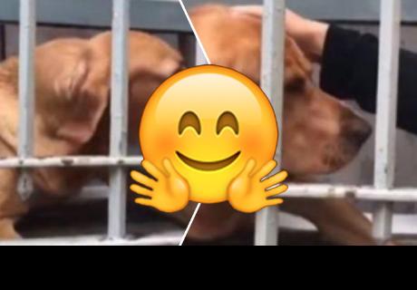 Perrito se asoma a la ventana para 'saludar' y recibir cariño de las personas