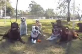 Perros y Gatos crean su propia versión de la canción 'Happy' - Video