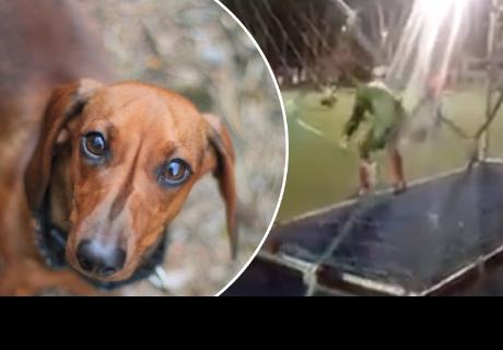 Perro ayuda a arquero a tapar un penal y se vuelve viral en las redes