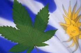 Uruguay legalizó la producción y venta de marihuana