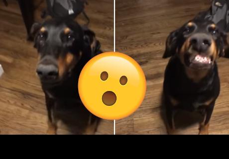 Perro intenta 'sonreír' tras recibir indicaciones de su dueño