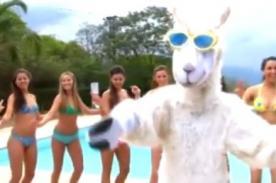 La llama que baila: Canción que promete ser el hit en Youtube - VIDEO