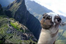 Selfie de llama en Machu Picchu causa sensación en redes sociales