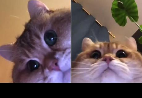 Gato que abrió la cámara frontal del celular de su dueño te llenará de ternura