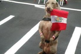 Parada Militar: Unidades caninas roban el show en desfile - Fotos